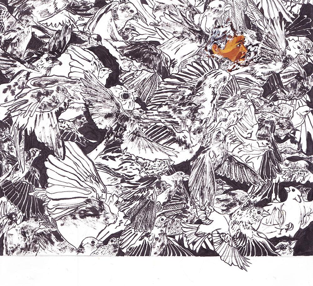 Pen & Ink Detailed Drawing of Birds Illustration